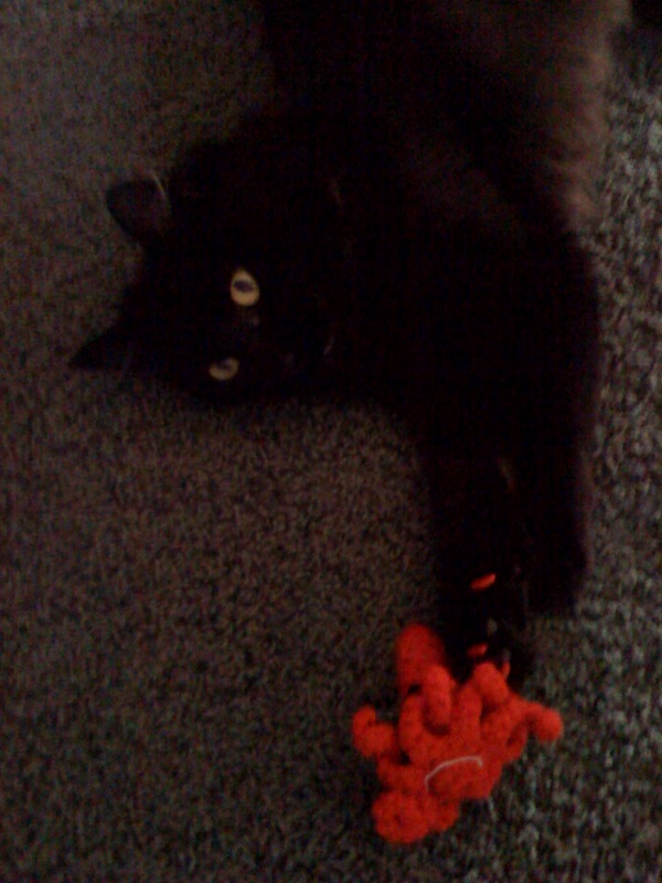 Pepper viciously attacks a squid - Photo by Ariel Servadio